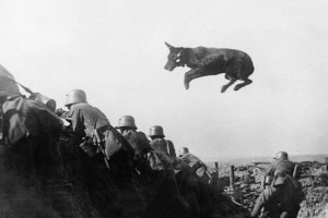 A dog carrying messages to the front line during WWI. Read the amazing story: #war #animals