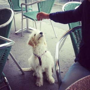 #joshi #dog #Café #savoy