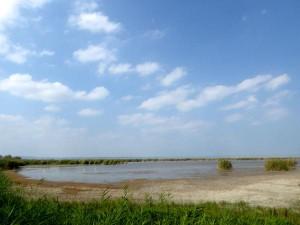 neusiedlersee mit schönwettercumulus, diversen silber- und seidenreihern sowie einer bekassine (schwer zu sehen)