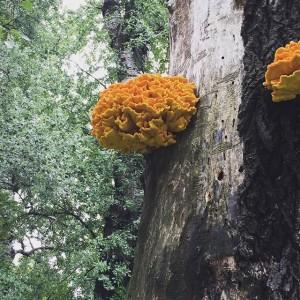 super fungi Wiener Prater