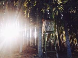✨ #vsco #vscogrid #vscorussia #vscogermany #germany #sachsen #forest #explore #wanderlust #darlingescapes