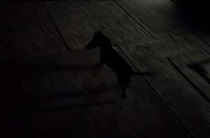MQ night walk