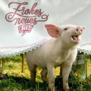 Wir wünschen Euch einen guten Rutsch und viel Schwein im Neuen Jahr! 🐷