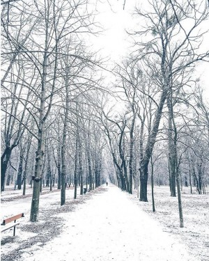 Vienna beautiful Prater ❄️💙❄️ Fist snow in Vienna on New Years Day! Have a wonderful start into...