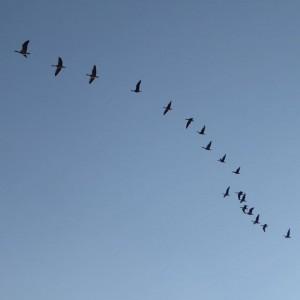 #neusiedlersee #vögel #burgenland #kurzurlaubat #chefunterwegs #himmel #blau #vogel #österreich #kurzurlaub