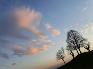 〰☀〰 #austria #vienna #österreich #wien #himmel #wolken #sky #skyporn #tree #baum #tree_captures #tree_magic #welovevienna #iloveaustria #smartphonepics #igersvienna...