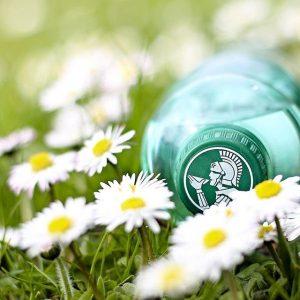 Samstag ist bei uns Gänseblümchen-Tag ♥ #frühling #spürenwirdasleben #römerquelle #belebtdiesinne #gänseblümchen