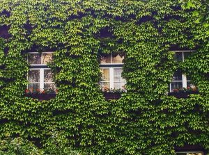 #architecture #nature #vienna #wien #doebling #döbling #lifeisgood #emolution #fassade #house #green #colour #instavienna #instagood #igers #igersvienna #igersaustria...