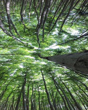 | wood stock . #nature_obsession #ig_select #jaw_dropping_shots #elite_shotz #globallandscapes #all_my_own #cool_capture_ #shotaward #landscape_captures #huntgramnature #landscape_hunters #marvelshots #ic_landscape...