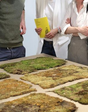 Moss, which usually grows on the ground in the shadows of other plants, is classed as a...