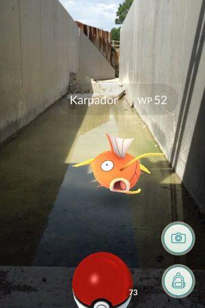 Monitoring success: #Karpador spotted at #fishpass Nussdorf/Vienna @fishmigration @LIFE_Programme #pokemonGO