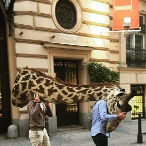 Seen today between @dorotheum and @wisskab #giraffe #taxidermy