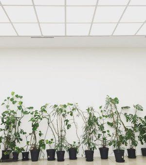 #theadjordjadze @viennasecession #atelier der Berliner Künstlerin in #Wien #vienna #wienersecession #plants #topfpflanzen Vienna ...