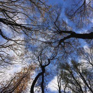 TREES #autumnalcolours #naturephotography #vienna #igersvienna