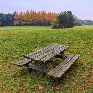 Autumn mornings are the best! #truestory #woods #bench #forest #green Steinhofgründe