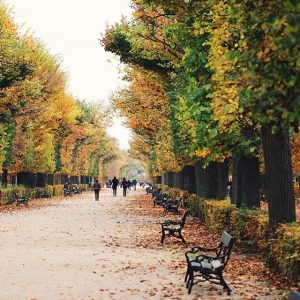I am already missing the beautiful colors of autumn! 😭 Schloß Schönbrunn