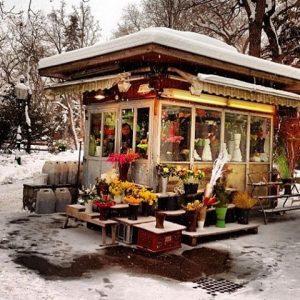 💐🌷🌹🌸🌻🌼🌺🌸 Meltingpot Stadtpark, Vienna