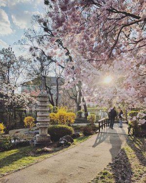 Setagaya, the japanese garden . . . . . #vienna #viennadaily #wien #visitaustria #visitvienna #igersvienna #igersaustria #photography...