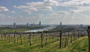 #Vineyards, the #Danube and #vienna_city 👌🏻