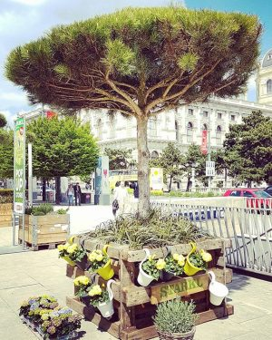 #eurotrip #vienna #austria #traveltheworld MQ – MuseumsQuartier Wien