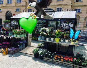 FLY BYE! #gartenkultMQ #popupstoreMQ #gartenzeit #frühlinginwien #springinvienna #flowers #greenvienna #moregreen #mqwien #wien #grüneswien #urbangardeningvienna #wienerschnitzel #wien_love #wienliebe...