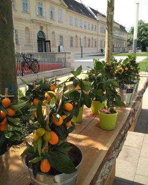 #oranges #vienna🇦🇹 🐌🐝🐞 #eurotripsfamily #gfenglishtour MQ – MuseumsQuartier Wien
