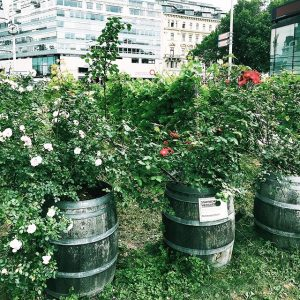 Spotted just steps away from our hotel: A city vineyard 🍇 Vienna really is quite unique! 💫...