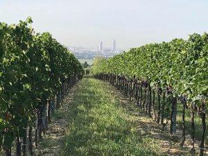 Einen wunderschönen Guten Morgen vom Bisamberg in Wien 😎 #bisamberg #wienwein #wein #wine #weisswein #rotwein #wienersixpack #trilogie...