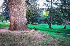 Squirrel hunting season #huk2017 Burggarten