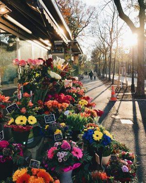 Apesar do frio que está fazendo, Viena está ensolarada e florida 😊🌺☀️ Vienna, Austria