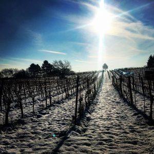 Der Samstag hat sich wieder auszahlt 😊🤘🏼 #stadtwanderweg #stadtwanderweg5 #hiking #wandern #winter #vienna #cold #snow #schnee #nature...
