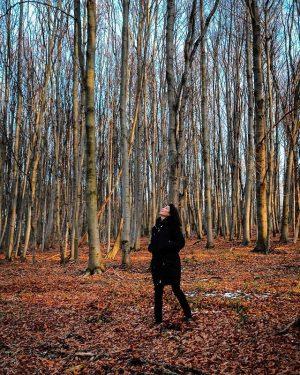 Into the woods Tullnerbach-Lawies, Niederösterreich, Austria