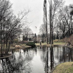 Vienna - Weekend Walk (January 2018) ———— #wien #vienna #schweitzergarten #nature #reflection #trees #naturelovers #naturewalk #pond #birds...