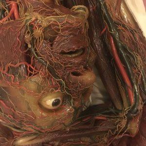 #nofilter #anatomy #skinned #wax #museum #vienna #josephinum #model #naked Josephinum