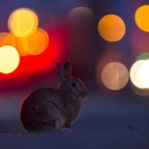 Die Wiener Osterhasen bereiten sich schon heute Nacht auf das Verstecken aller Körbchen vor 🐰🐣🥚🍫🎁 Foto: Wiener...