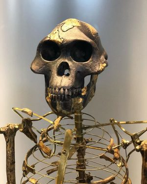 #australopithecus #skull #💀 NhM Naturhistorisches Museum Wien