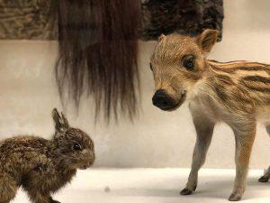 Seasons greetings #🐰 NhM Naturhistorisches Museum Wien