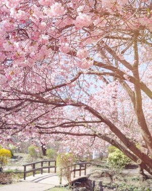 Dreaming away under this beautiful cherry tree 🌸 what are your weekend plans with this gorgeous weather?...