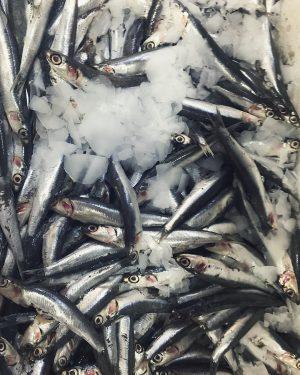 Sardinen und Sardellen wild, heute im Angebot 1kg/10€ 🐟☀️#sardines#anchovies#fish#freshfish#umarfisch#naschmarkt#city#vienna#wien#sunshine#food#freshfood#foodporn#foodshare