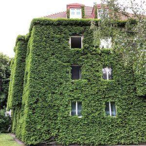#vienna #leopoldstadt #house #haus #efeu #ivy #ivyhouse #efeuhaus