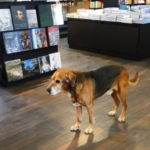 #dog #bookstore #dogsofinstagram #vienna