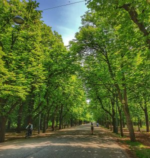ThePrateris a large public park inVienna's 2nd district (Leopoldstadt). TheWurstelprateramusement park, often simply called
