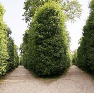 Which path would you choose? . . . . . #vienna #augarten #austria #wien #österreich #walk #outdoors...
