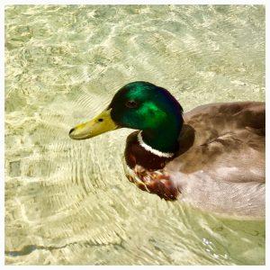 ☀️#poolposition 🦆 #mqducks #mqwien #mq #ducks #fighttheheat #museumsquartier #urbanliving #urbanlifestyle #wien #wienliebe #vienna #vienna_city #viennanow #viennagram #vienna_austria...