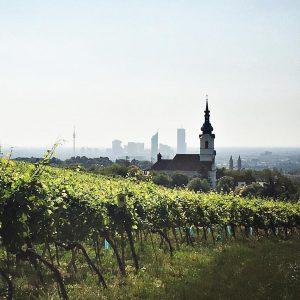 Sonntagsspaziergang durch die Grinzinger Weinberge ☀️ #wienliebe #viennanow #grinzing #kaasgraben #igersvienna #igersaustria #vineyard #sundayfunday