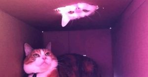 SA 25.08. ab 20.30h CAT VIDEO FESTIVAL @mqwien Haupthof mit @viennashorts #catvideo #miau #lasstdiekatzenraus #sommer #kino #abenteuer