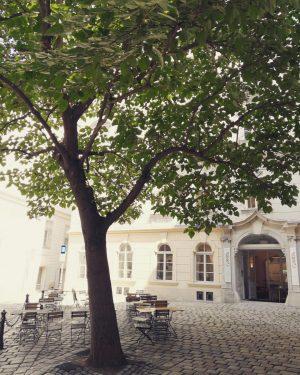 Idyllisch ❤️😳🤭 #wow #wunderbar #wunderschön #idylisch #ilovevienna #ichliebewien #visitevienna #baum #ilovetrees #ichliebebäume