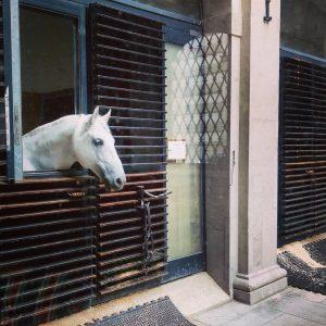 A horse, of course. #spanishridingschool #spanishridingschoolofvienna #horse #stables #vienna #lipizzan