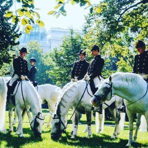 Lippizaner in the Burggarden of Vienna. #horses #garden
