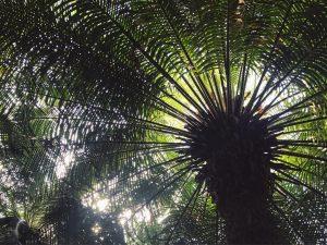 addicted to palms ♡🌴 . . . . #tb #throwback #vienna #austria #palmenhaus #schönbrunn #glasshouse #junglevibes #beautiful...